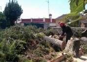 Precios de poda de arboles+poda en altura+limpieza+parcelas+jardin+663777576